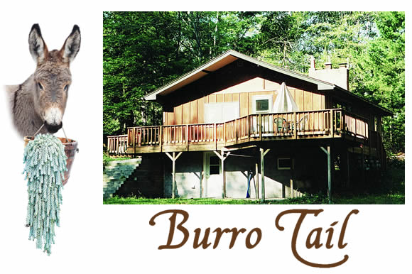 burrotail-lodge